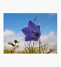 Wildflowers. The Burren County Clare Ireland Photographic Print