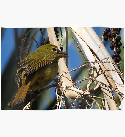 Summer Tanager ~ Female Poster