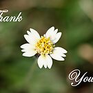 Thank you...... by cathywillett