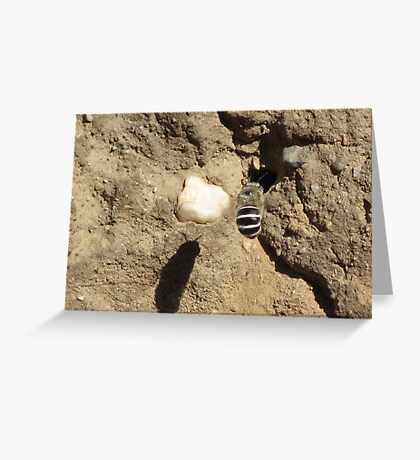 White-banded Digger Bee Greeting Card