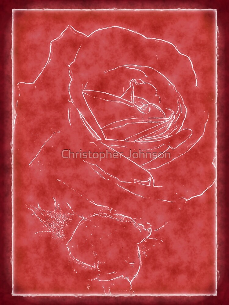 Pink Roses in Anzures 2 Outlined Red by TravelPhotoArt