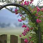 Rose Arch by waxyfrog