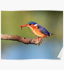 the professional fisherbird Poster