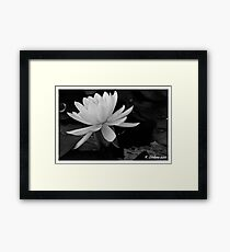 b/w lily Framed Print