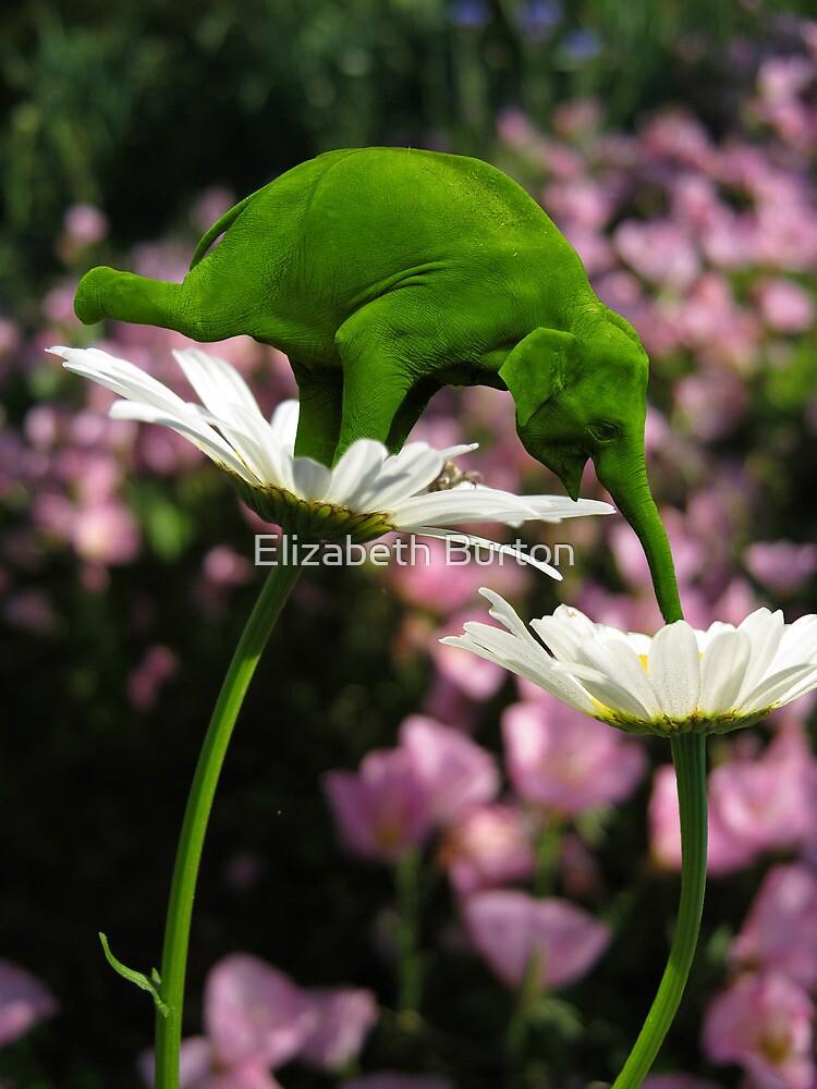 Evolution & Balance by Elizabeth Burton
