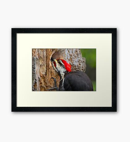 The search is on Framed Print