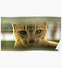 Community Cat Poster