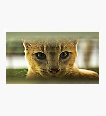 Community Cat Photographic Print