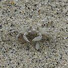 Crab Camo by Geoffrey Wicking