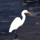 Great Egret by Sharon Woerner