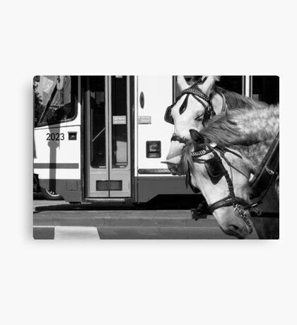 No more horsin' around Canvas Print