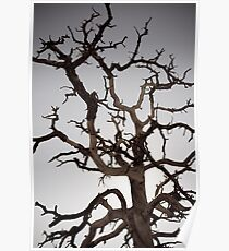 Tree of Gondor Poster