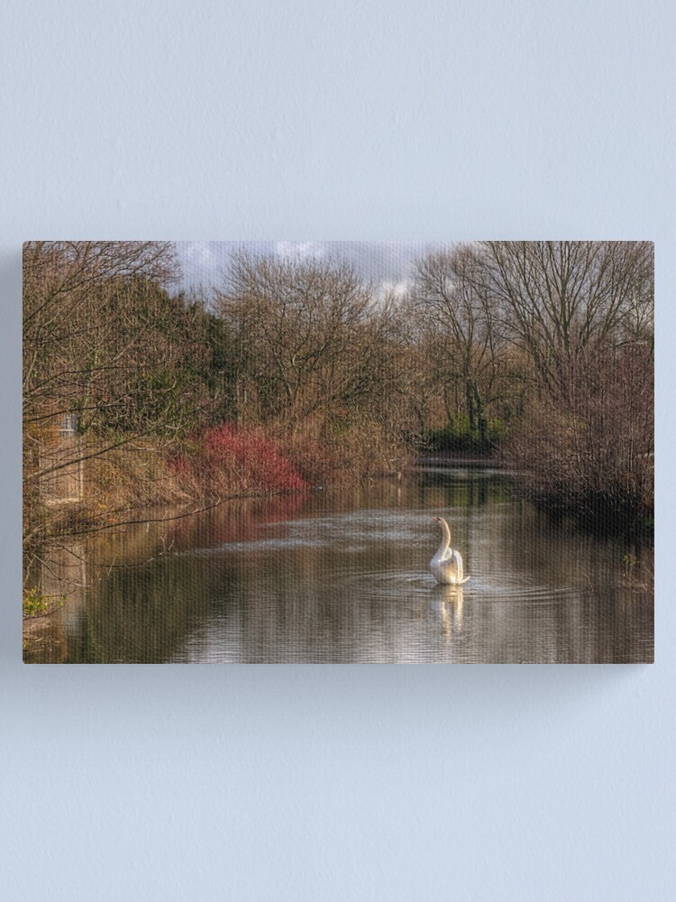 Alternate view of A Swan on the  River Itchen Canvas Print