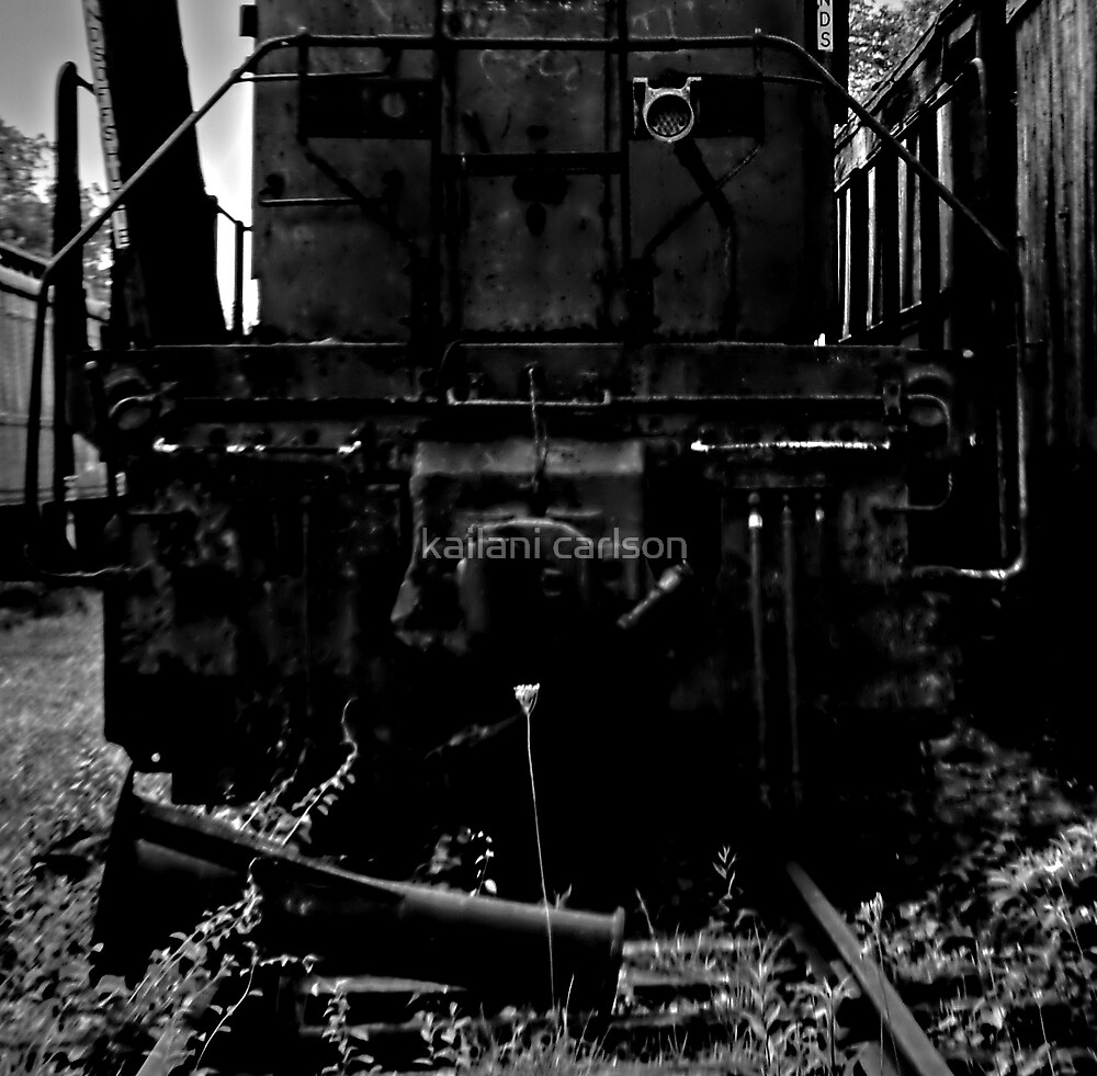 Single Flower, Abandoned Train by kailani carlson