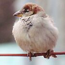 A Simple Sparrow by lorilee