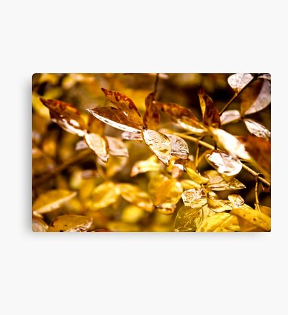 It Rained Gold Canvas Print