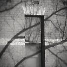 The Window Tree by Christine Wilson