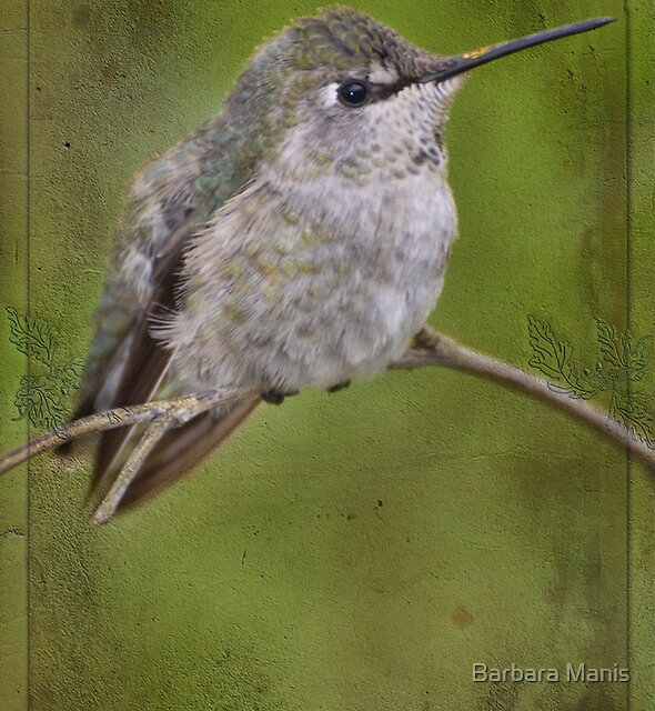 Pretty Little Hummer by Barbara Manis