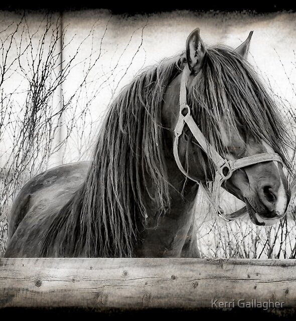 Exquisite by Kerri Gallagher