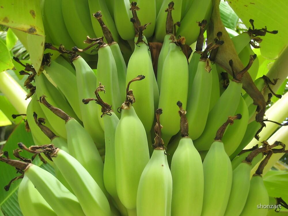 Bananas Rarotonga by shonzart