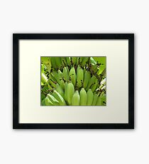 Bananas Rarotonga Framed Print