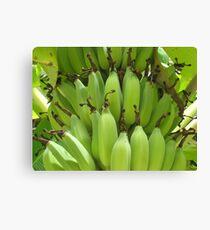 Bananas Rarotonga Canvas Print