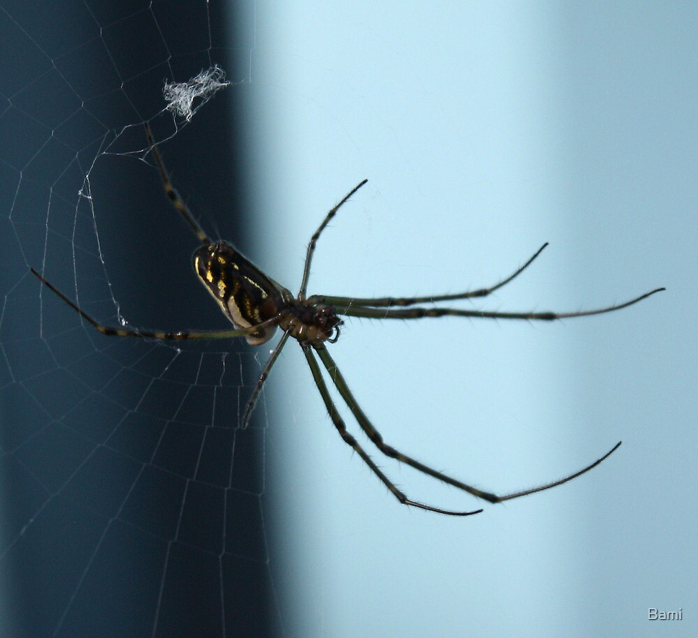 Spinning Spider by Bami