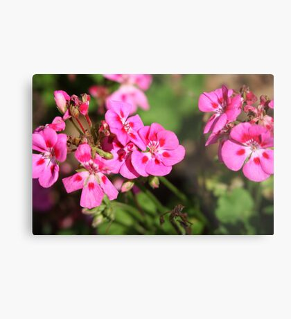 Rhododendron 8813 Metal Print