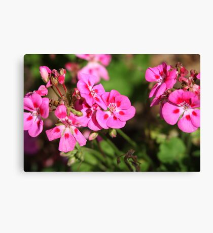Rhododendron 8813 Canvas Print