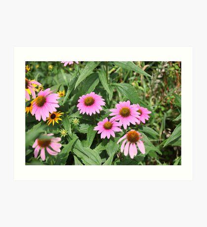 Echinacea 8679 Art Print