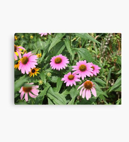 Echinacea 8679 Canvas Print