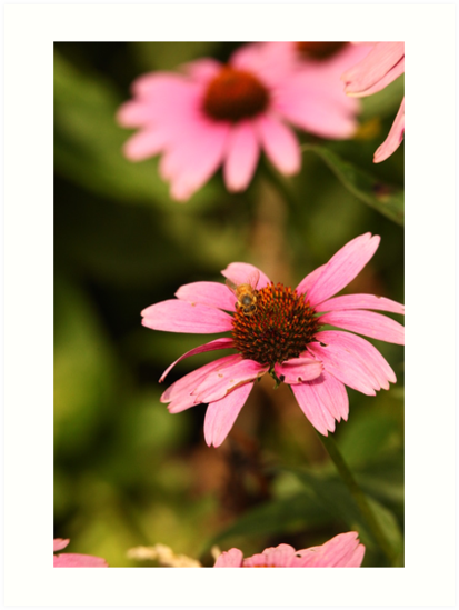 Echinacea with Bee 8674 by Thomas Murphy
