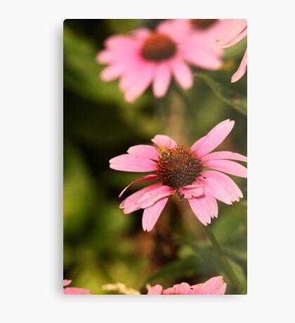 Echinacea with Bee 8674 Metal Print
