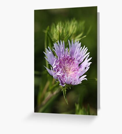 Chyrsanthemum 6828 Greeting Card