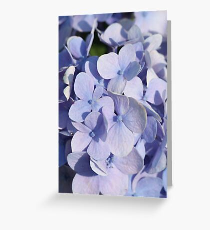 Flower 7011 Greeting Card