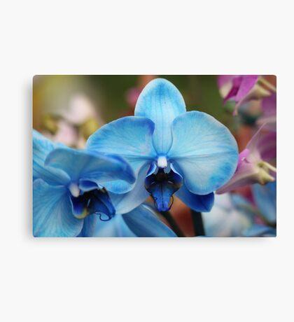 Blue Orchid 7053 Canvas Print