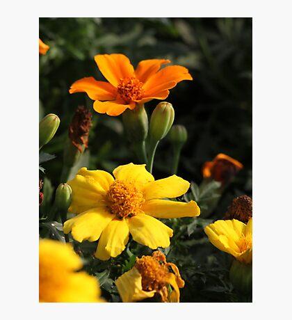 Flower 7130 Photographic Print