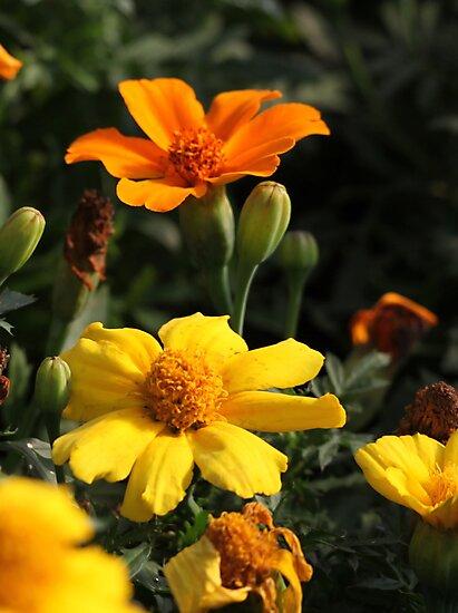 Flower 7130 by Thomas Murphy