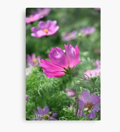 Cosmos Flower 7142 Metal Print