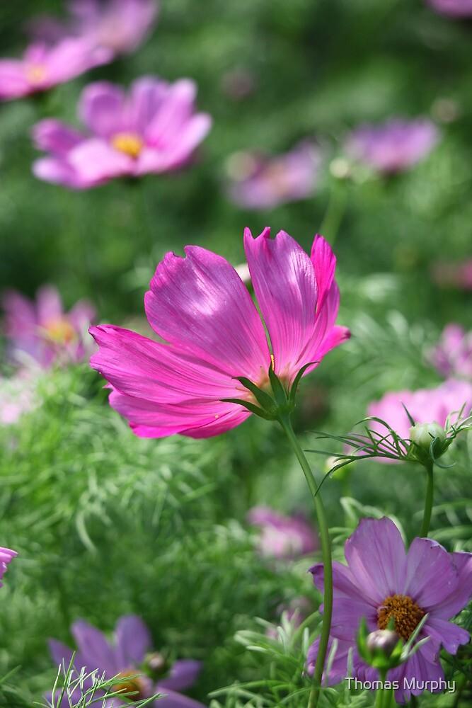 Flower 7142 by Thomas Murphy
