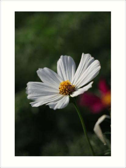 Flower 7156 by Thomas Murphy