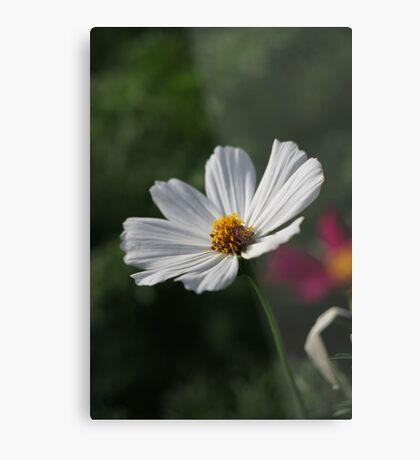 Flower 7156 Metal Print