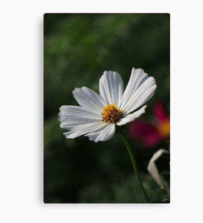 Flower 7156 Canvas Print