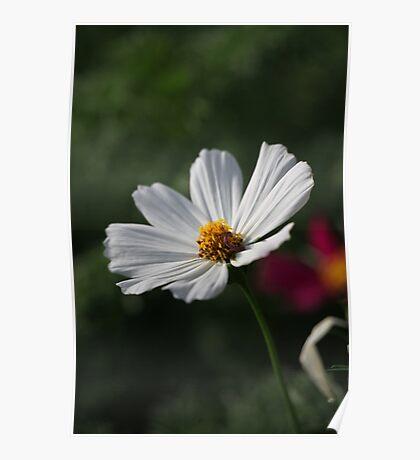 Flower 7156 Poster