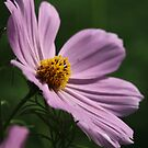 Cosmos 7160 by Thomas Murphy