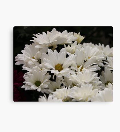 Daisy Flowers 7083 Canvas Print