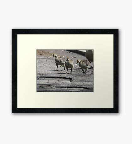 The Gosling Gang Framed Print