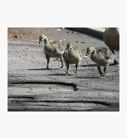 The Gosling Gang Photographic Print