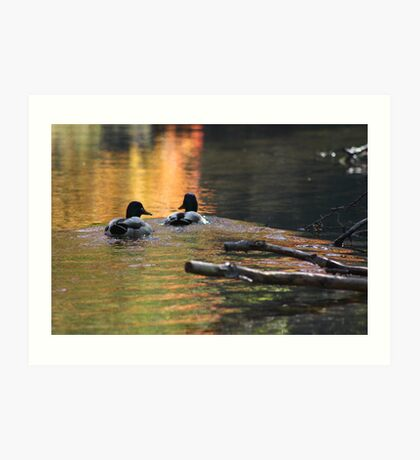 The Leading Ducks Art Print