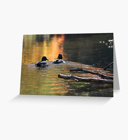 The Leading Ducks Greeting Card